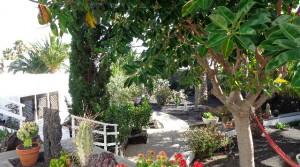 jardin hamaca