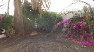 terraza a jardin